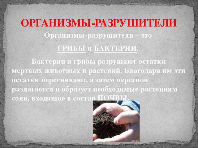 ОРГАНИЗМЫ-РАЗРУШИТЕЛИ Организмы-разрушители – это ГРИБЫ и БАКТЕРИИ. Бактери...
