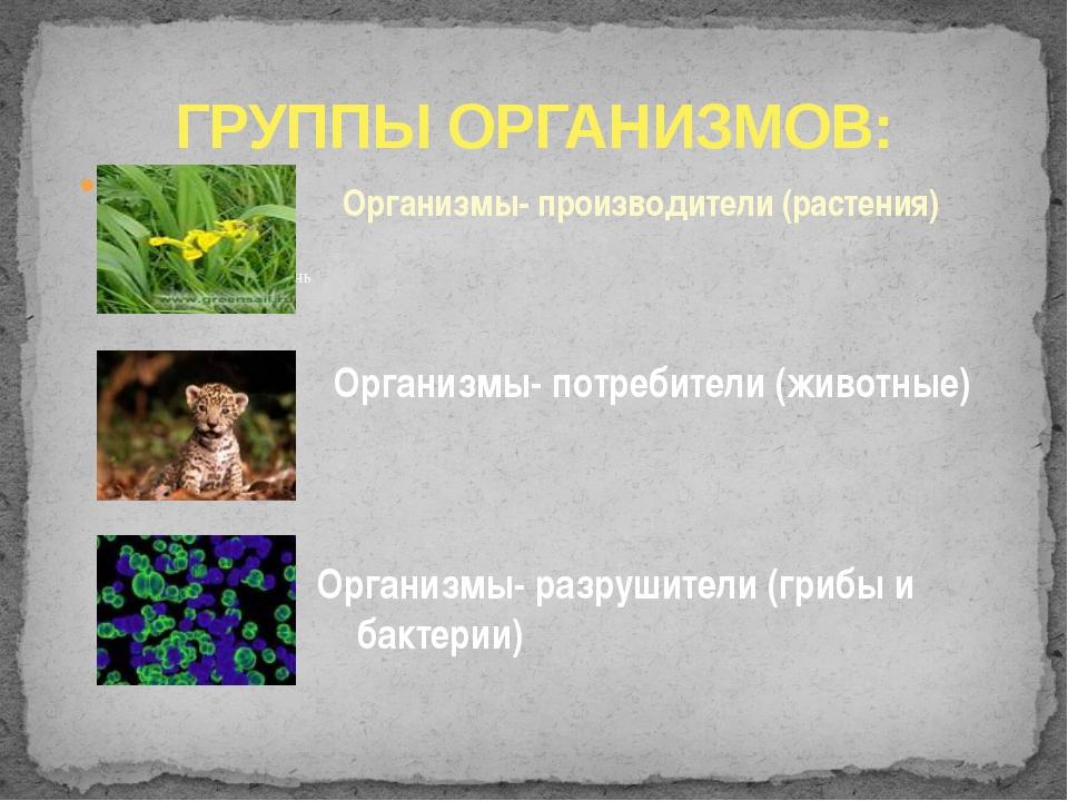 ГРУППЫ ОРГАНИЗМОВ: Организмы- производители (растения) Организмы- потребители...