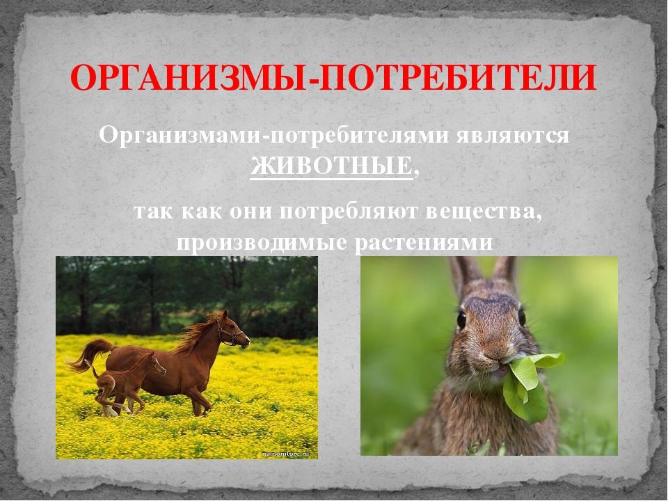ОРГАНИЗМЫ-ПОТРЕБИТЕЛИ Организмами-потребителями являются ЖИВОТНЫЕ, так как он...