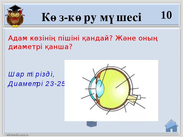 Шар тәрізді, Диаметрі 23-25 см Адам көзінің пішіні қандай? Және оның диаметрі...