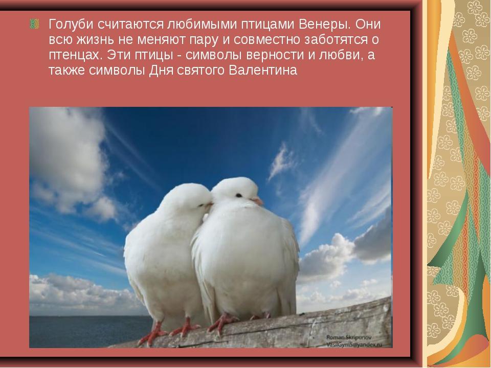 Голуби считаются любимыми птицами Венеры. Они всю жизнь не меняют пару и совм...