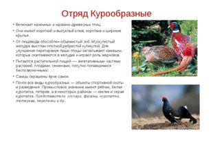 Отряд Курообразные Включает наземных и наземно-древесных птиц. Они имеют коро