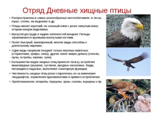 Отряд Дневные хищные птицы Распространены в самых разнообразных местообитания