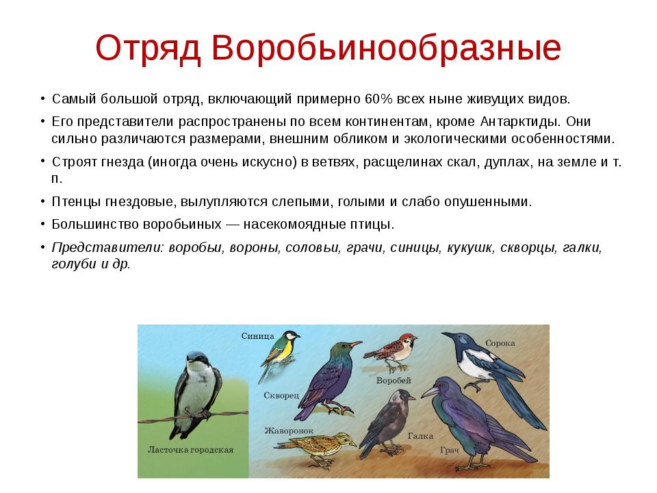 Отряд Воробьинообразные Самый большой отряд, включающий примерно 60% всех нын...