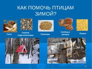 КАК ПОМОЧЬ ПТИЦАМ ЗИМОЙ? Сало Семена подсолнечника Пшеница Хлебные крошки Пше