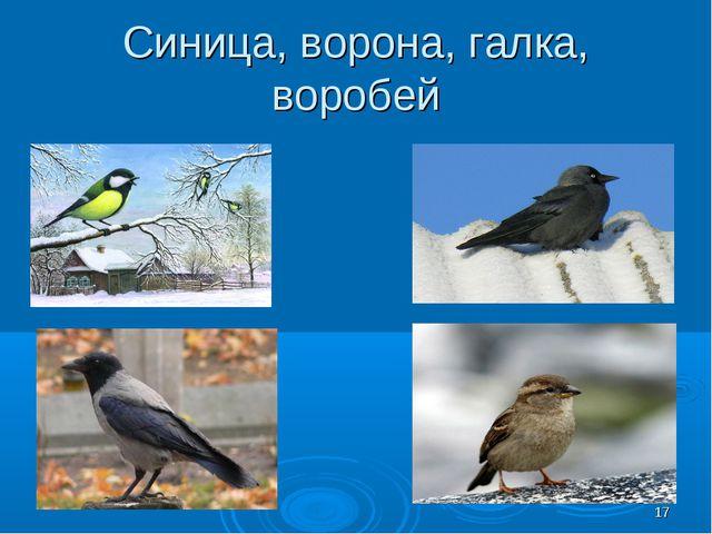 Синица, ворона, галка, воробей *