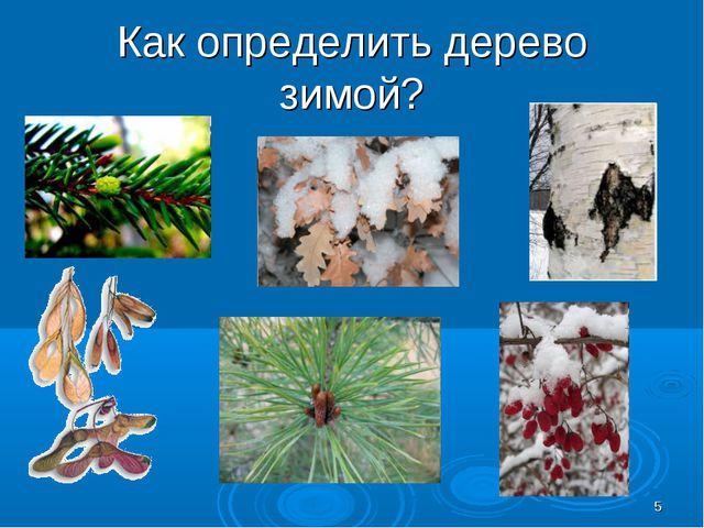 Как определить дерево зимой? *