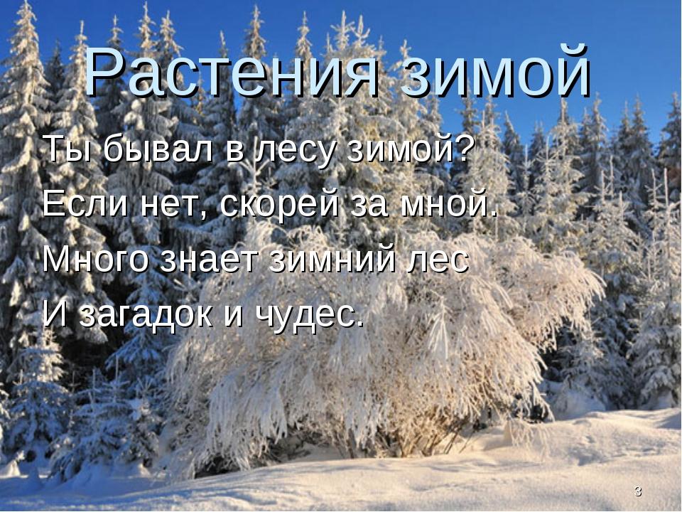 Растения зимой Ты бывал в лесу зимой? Если нет, скорей за мной. Много знает з...