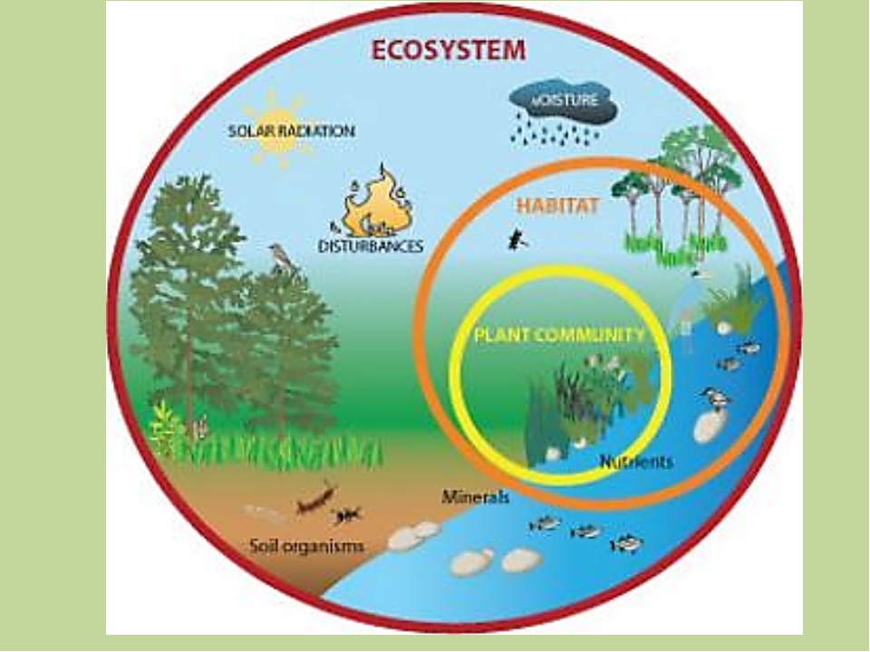 biodiversity is defined as the variety of different types of life found on earth Biodiversity basically sums up life on earth it includes the diversity of genes, species and ecosystems this diversity was created over millions of years and we are now we should be aiming to leave our children and grandchildren a fascinating world which is full of variety and worth living in.