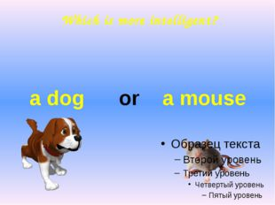 Which is more intelligent? a dog or a mouse