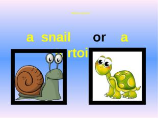 Which is faster? a snail or a tortoise