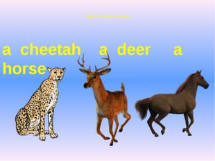Which is the fastest animal? a cheetah a deer a horse