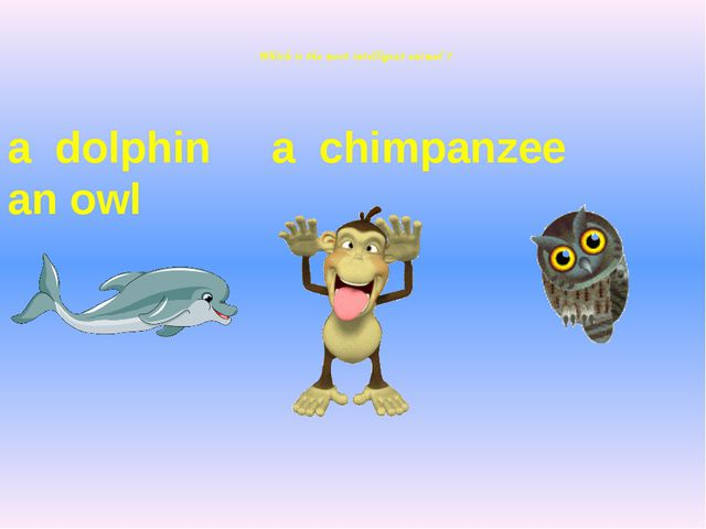 Which is the most intelligent animal ? a dolphin a chimpanzee an owl