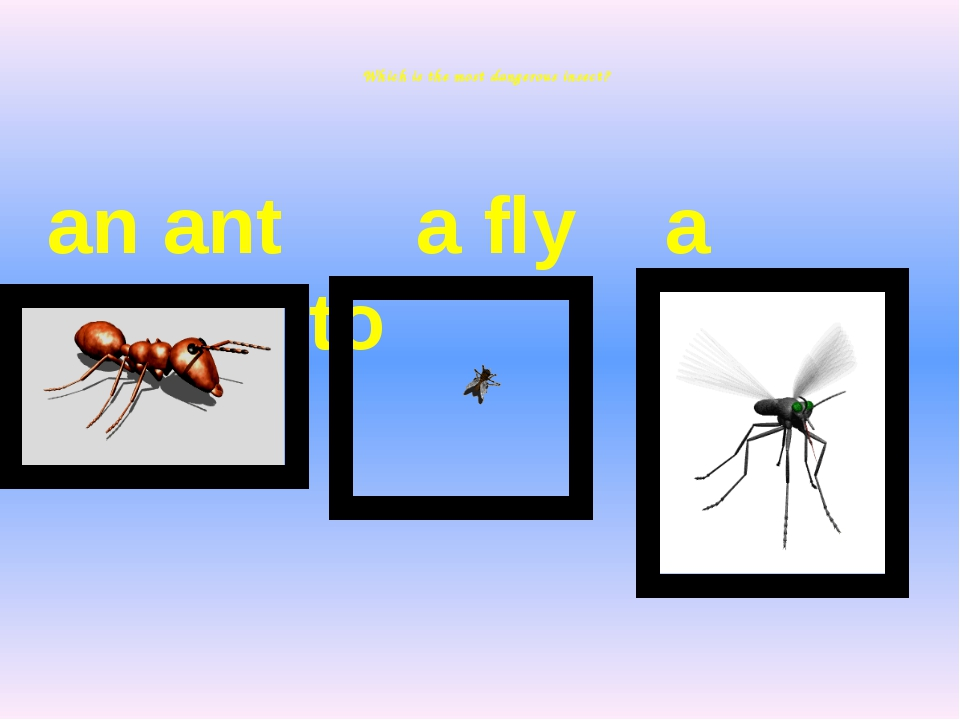 Which is the most dangerous insect? an ant a fly a mosquito