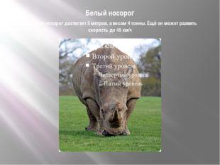 Белый носорог Высотой носорог достигает 5 метров, а весом 4 тонны. Ещё он мож