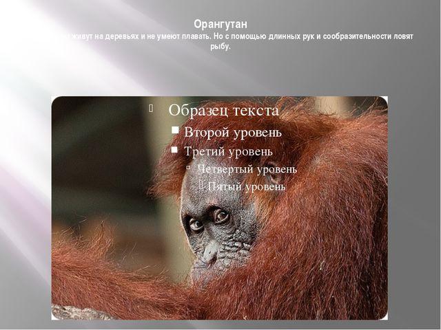 Орангутан Орангутаны живут на деревьях и не умеют плавать. Но с помощью длинн...