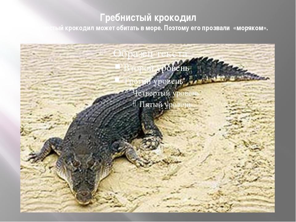 Гребнистый крокодил Гребнистый крокодил может обитать в море. Поэтому его про...