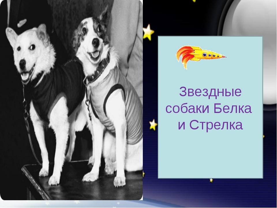 Звездные собаки Белка и Стрелка