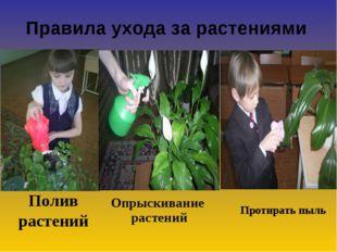 Полив растений Правила ухода за растениями Опрыскивание растений Протирать пыль