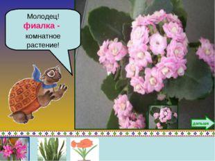 Молодец! фиалка - комнатное растение! дальше
