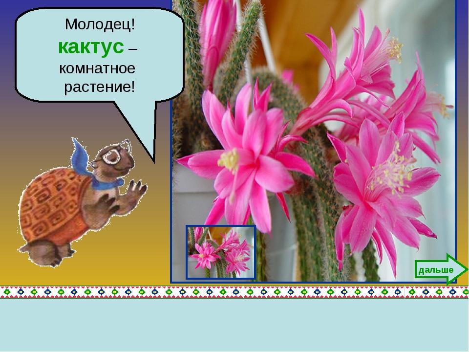 Молодец! кактус – комнатное растение! дальше