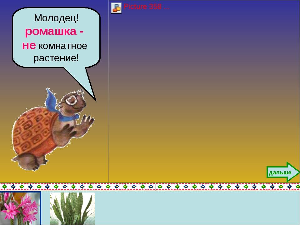 Молодец! ромашка - не комнатное растение! дальше