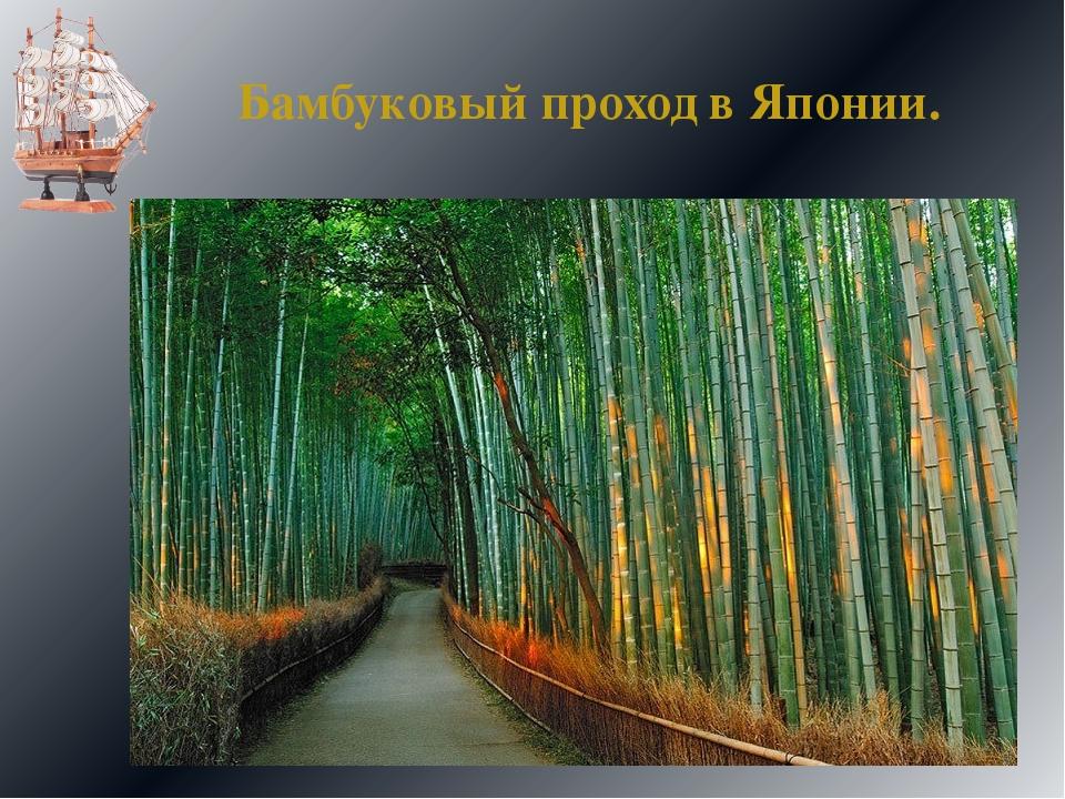 Бамбуковый проход в Японии.