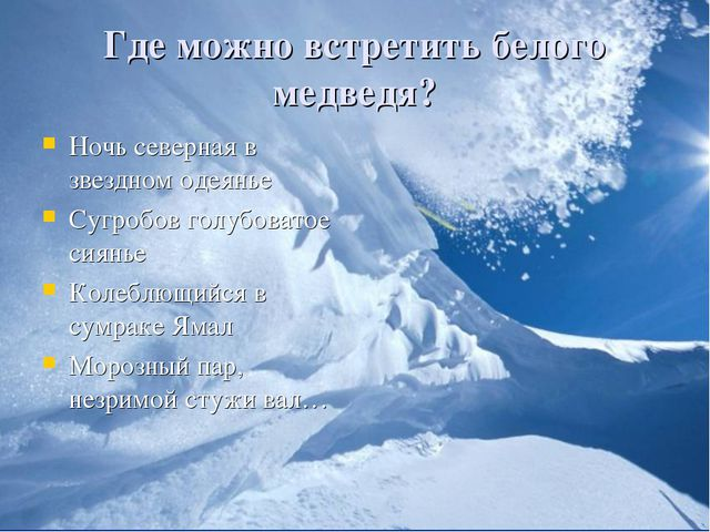 Где можно встретить белого медведя? Ночь северная в звездном одеянье Сугробов...