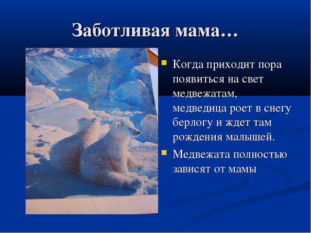 Заботливая мама… Когда приходит пора появиться на свет медвежатам, медведица...