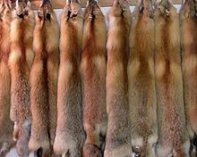 https://upload.wikimedia.org/wikipedia/commons/thumb/a/a7/Fur_redfox.jpg/220px-Fur_redfox.jpg