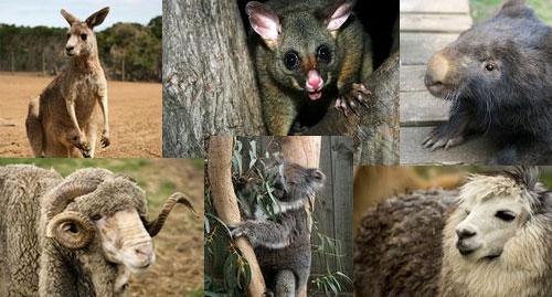 Детские игры народов мира - Австралия