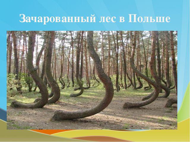 Зачарованный лес в Польше