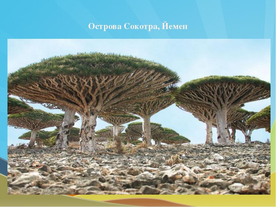 Острова Сокотра, Йемен
