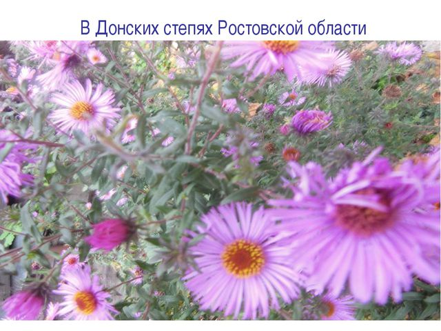 В Донских степях Ростовской области