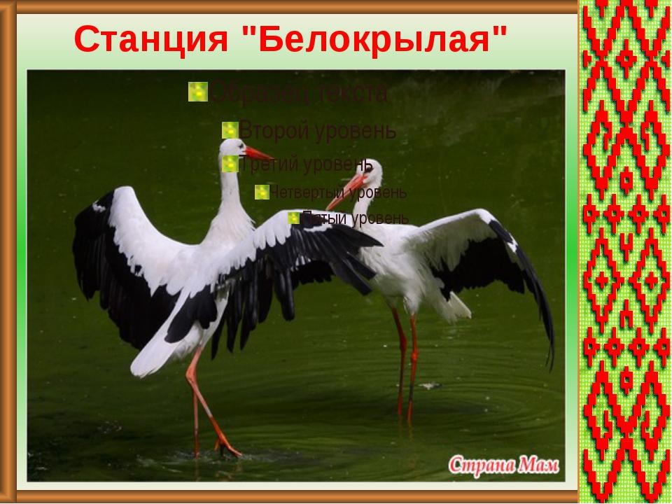 "Станция ""Белокрылая"""