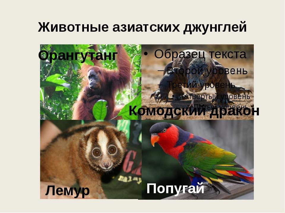 Животные азиатских джунглей Орангутанг Лемур Комодский дракон Попугай