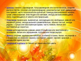 Сырое́жка Шляпкасначала шаровидная, полушаровидная или колокольчатая, поздне