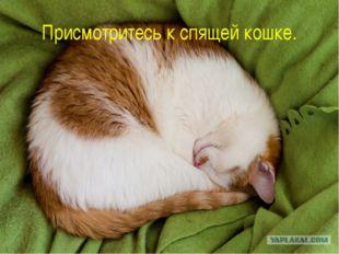 Присмотритесь к спящей кошке.