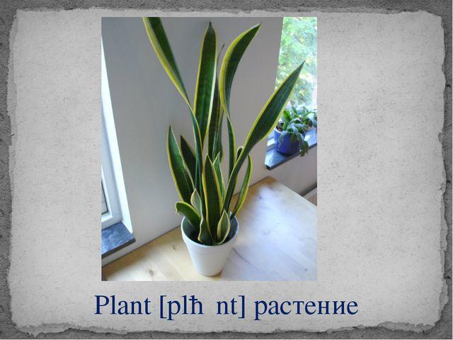 Plant [plɑːnt] растение