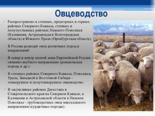 Овцеводство Распространено в степных, предгорных и горных районах Северного К