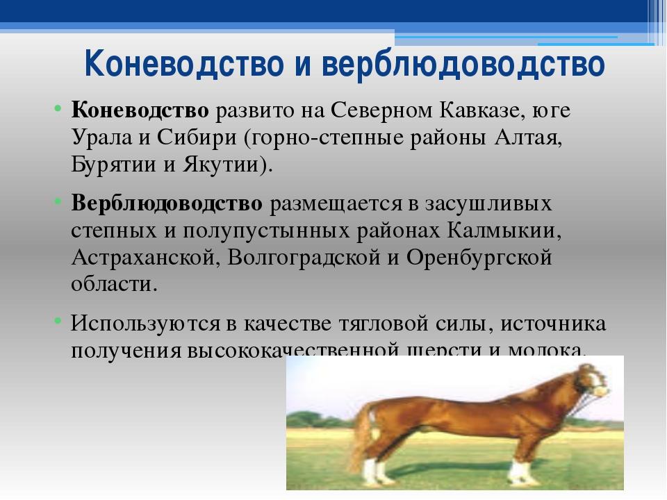 Коневодство и верблюдоводство Коневодство развито на Северном Кавказе, юге Ур...