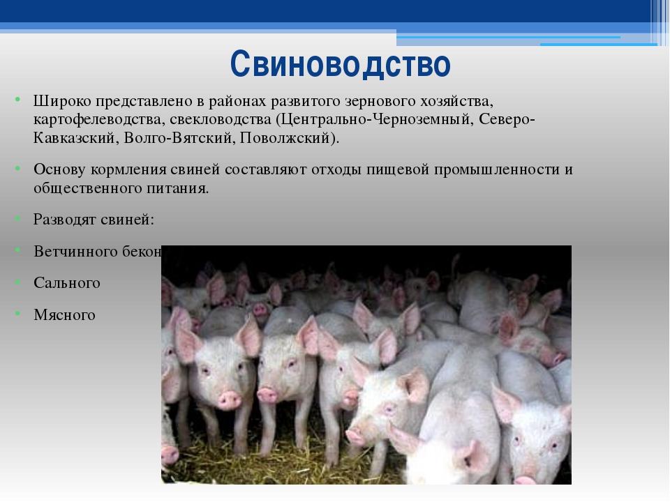 Свиноводство Широко представлено в районах развитого зернового хозяйства, кар...
