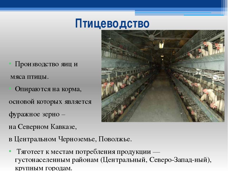Птицеводство Производство яиц и мяса птицы. Опираются на корма, основой котор...