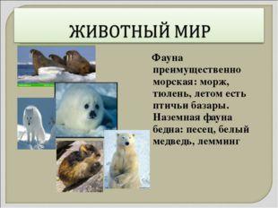 Фауна преимущественно морская: морж, тюлень, летом есть птичьи базары. Назем