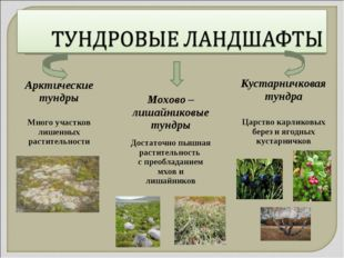 Кустарничковая тундра Царство карликовых берез и ягодных кустарничков Мохово