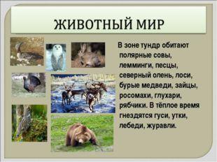 В зоне тундр обитают полярные совы, лемминги, песцы, северный олень, лоси, б