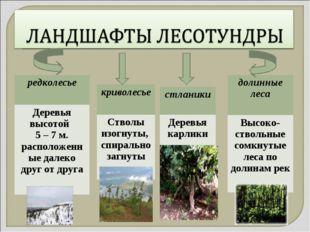 редколесье Деревья высотой 5 – 7 м. расположенные далеко друг от друга кривол