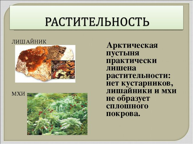 ЛИШАЙНИК МХИ Арктическая пустыня практически лишена растительности: нет куста...