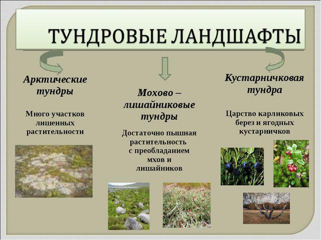 Кустарничковая тундра Царство карликовых берез и ягодных кустарничков Мохово...