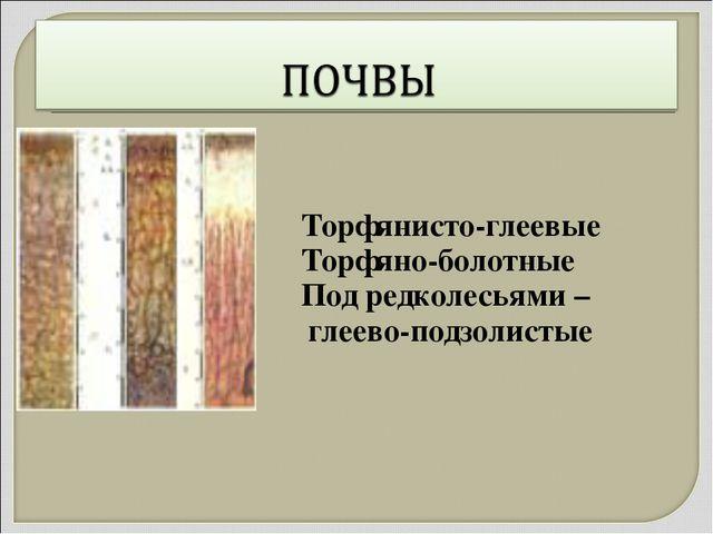Торфянисто-глеевые Торфяно-болотные Под редколесьями – глеево-подзолистые